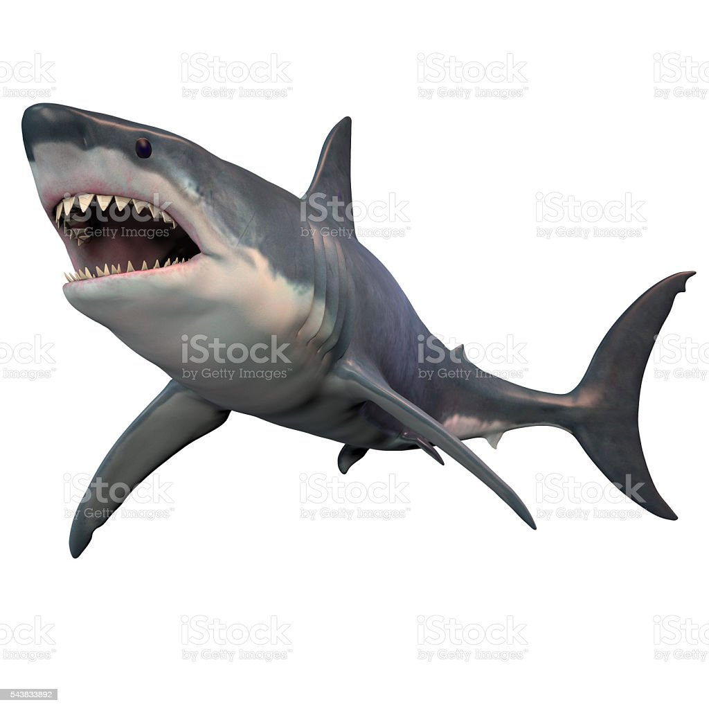 Great White Shark Isolated stock photo