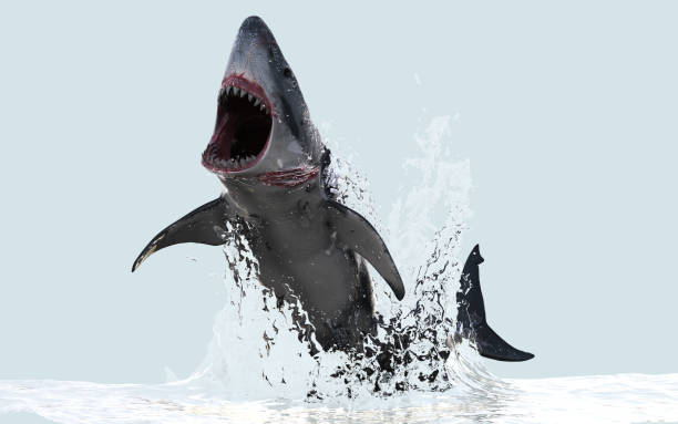 Grote witte haai springt uit het Water foto