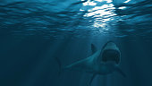 Great white shark, mouth stretched just before attacking
