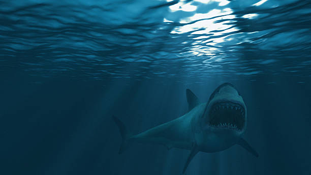 great white shark, mouth stretched just before attacking - squalo foto e immagini stock