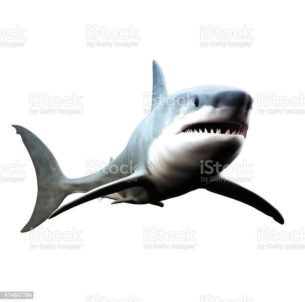 Great white shark picture id474647794?b=1&k=6&m=474647794&s=612x612&h=5j6y 0dqhsqcc4upnvoc4rxiyz4aa1guqtvpmizyjqy=