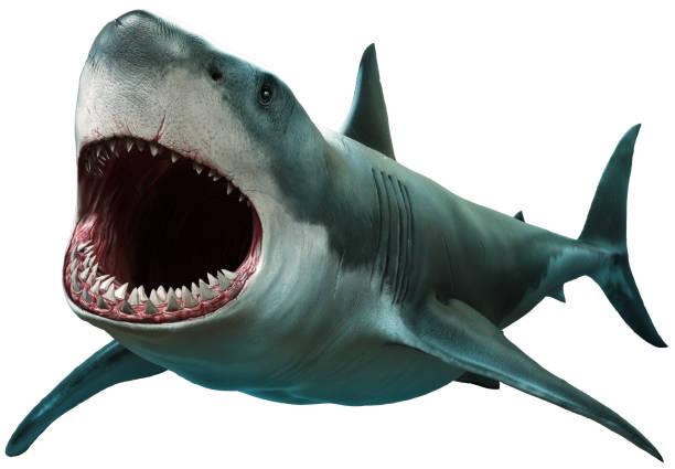 great white shark - squalo foto e immagini stock