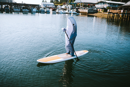 A person wearing a generic great white shark inflatable costume goes paddleboarding in the harbor.  A funny playful twist on shark and human interaction.