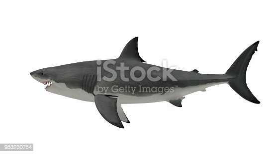 Great white shark side view on white