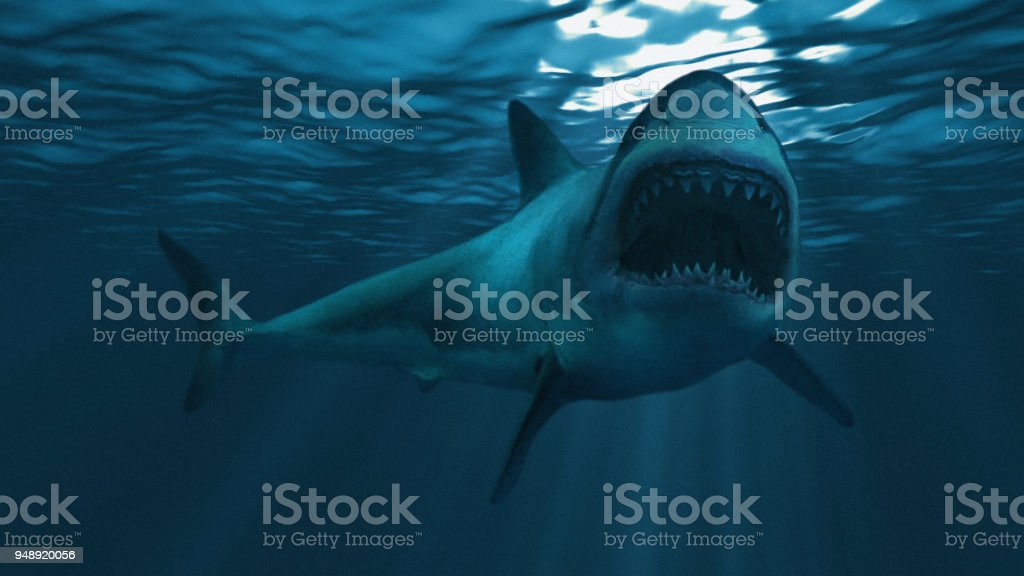 Great white shark underwater diagonal, focus on the front half stock photo