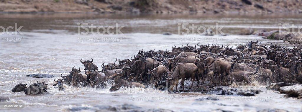 Great Wildebeest Migration stock photo