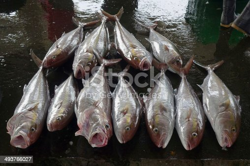 istock Greater Amberjack Fish at the Fish Market 493766027