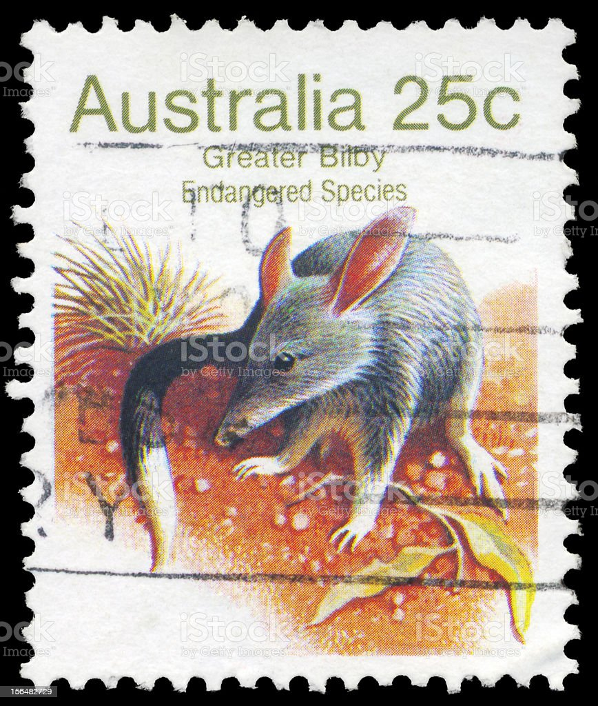 Greater Bilby royalty-free stock photo