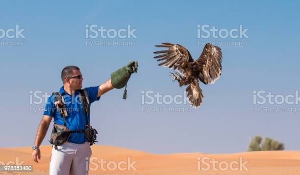 Greater spotted eagle during a desert falconry show in dubai uae picture id978353460?b=1&k=6&m=978353460&s=612x612&h=m5spbvpwaqddde h3fzcfqrndc  xiyddvioxz kiiw=
