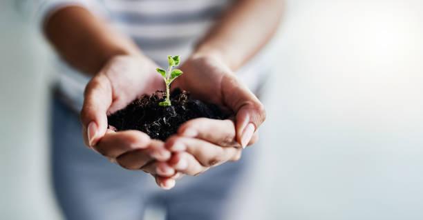 greatness blossoms in the right hands - pączek etap rozwoju rośliny zdjęcia i obrazy z banku zdjęć