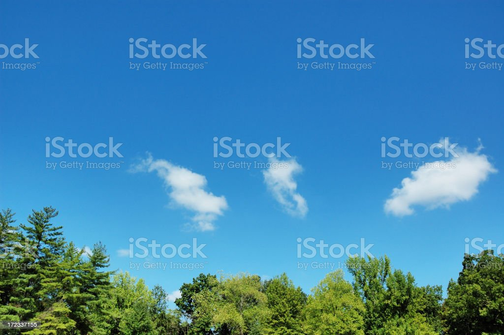 Greed Tree Tops and Blue Sky stock photo