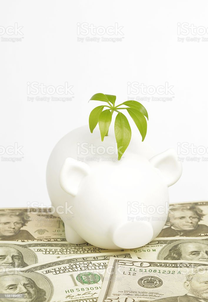 Greedy Pig stock photo