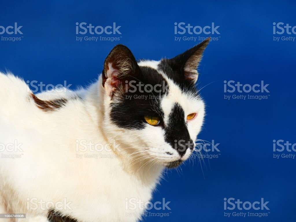 Greek cat, Amorgos island, Greece stock photo