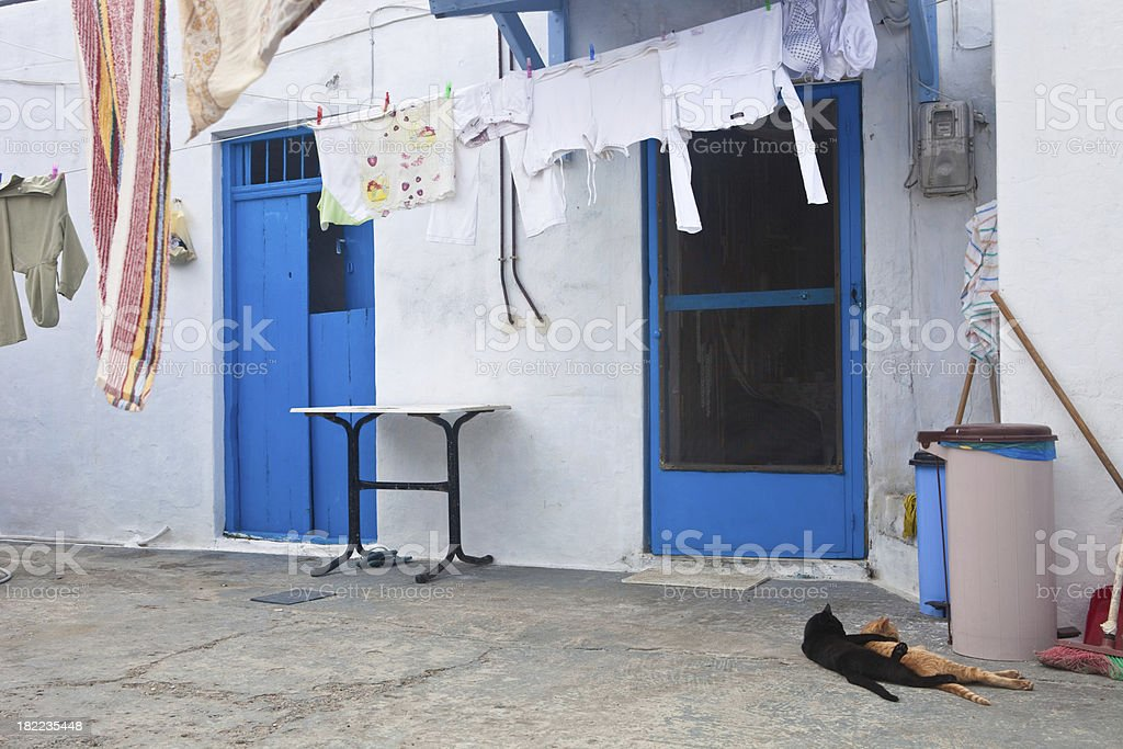 Greek Cats in Love royalty-free stock photo