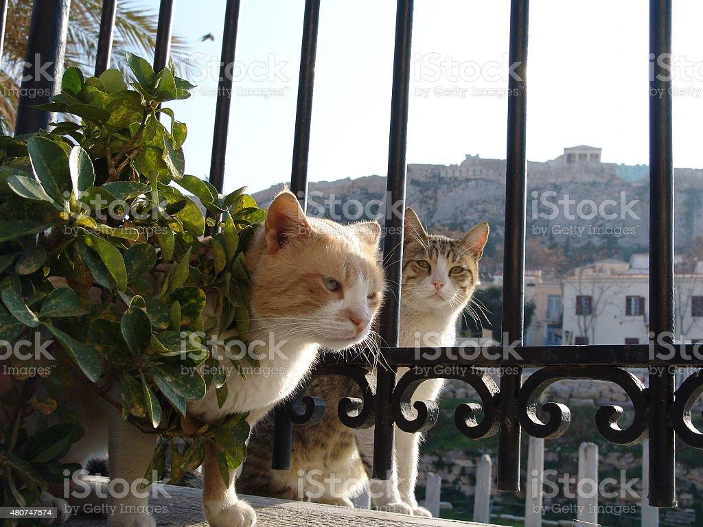 Greek cats stok fotoğrafı