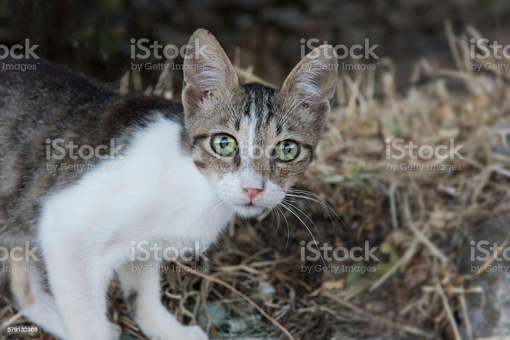Greek Island cat with green eyes stock photo