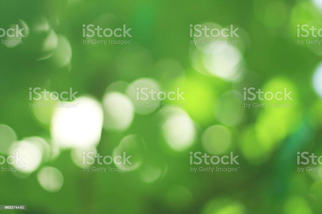 Green abstract background, Natural bokeh in the vineyard. zbiór zdjęć royalty-free