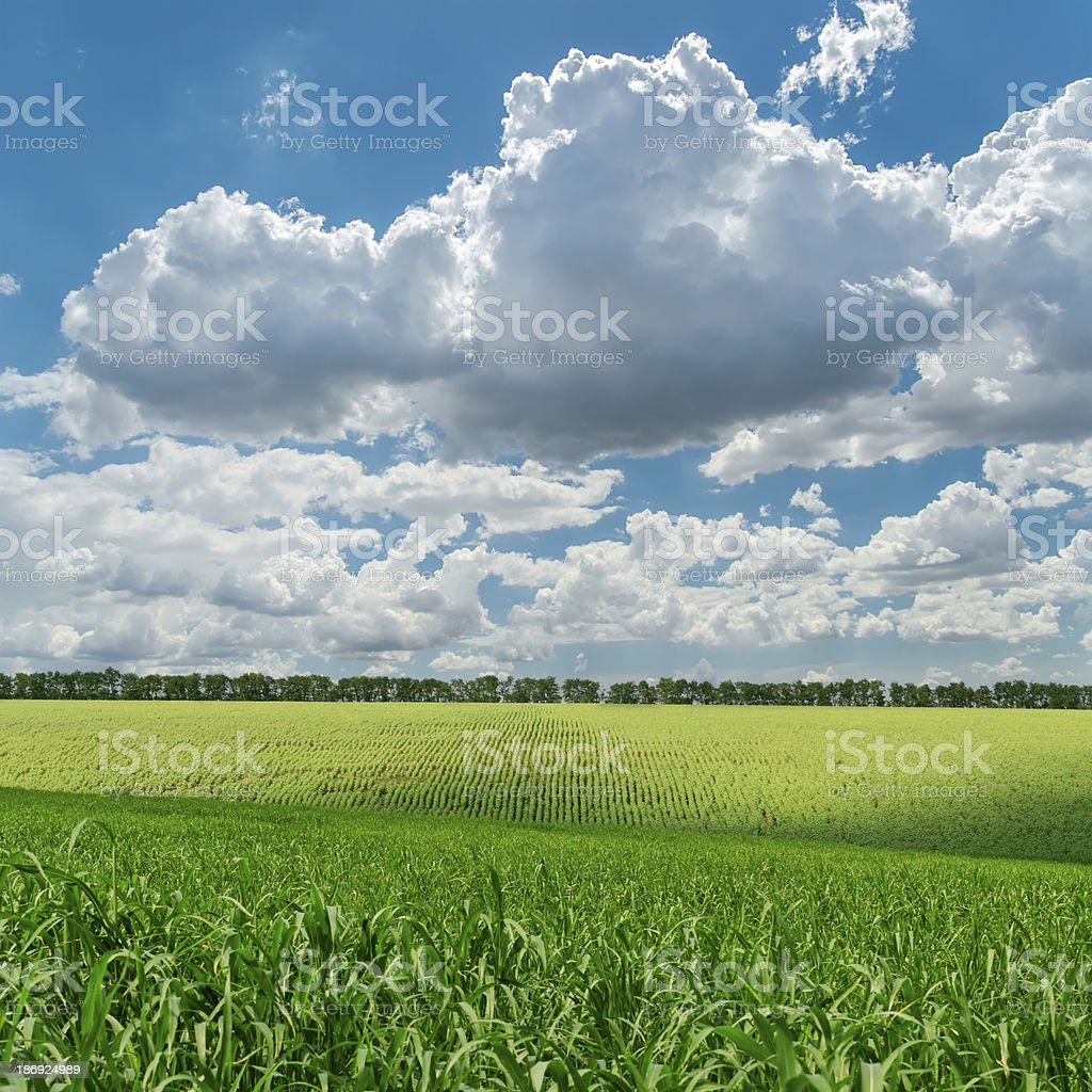 green agriculture field under cloudy sky royalty-free stock photo