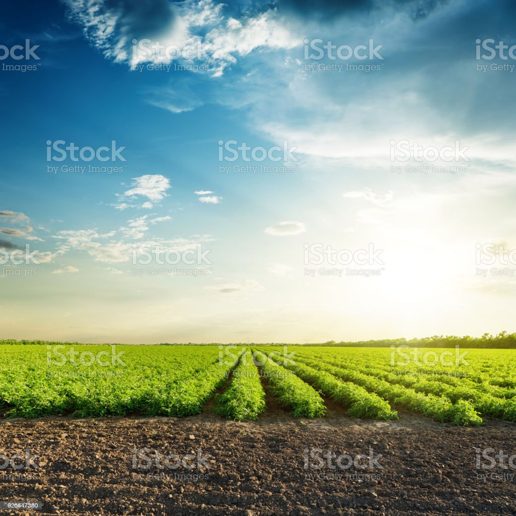 green agriculture fields and sunset in blue sky with clouds stock photo