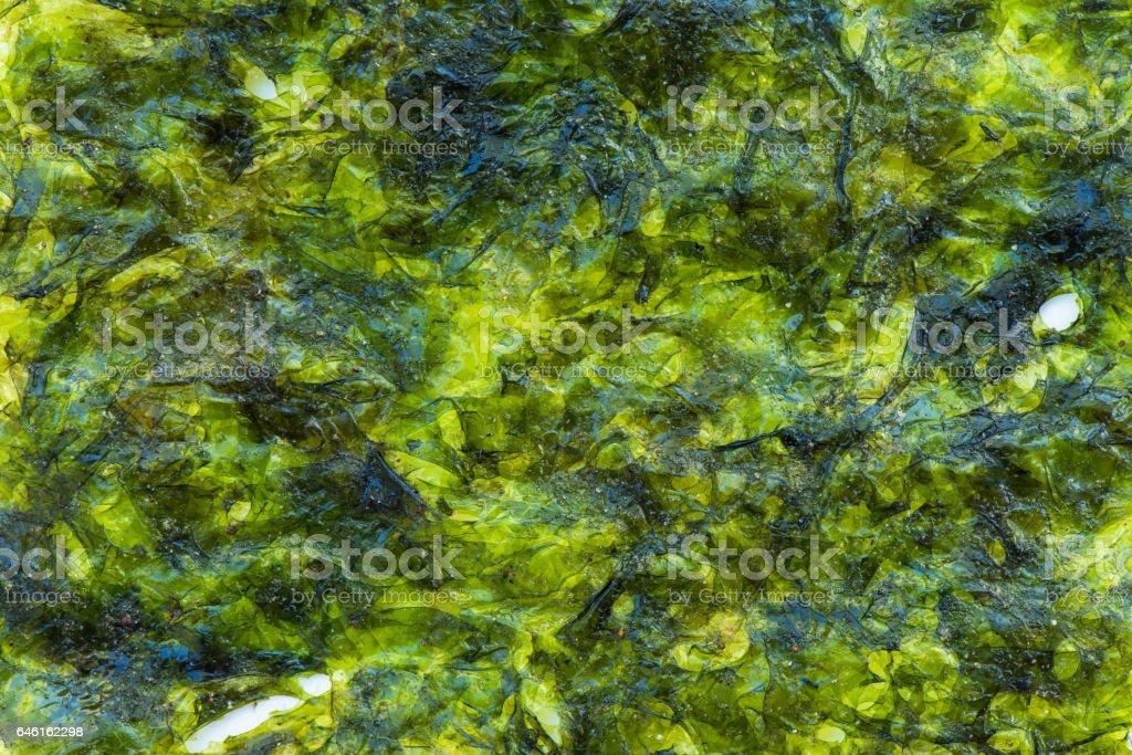 Green Alga background and textured stock photo