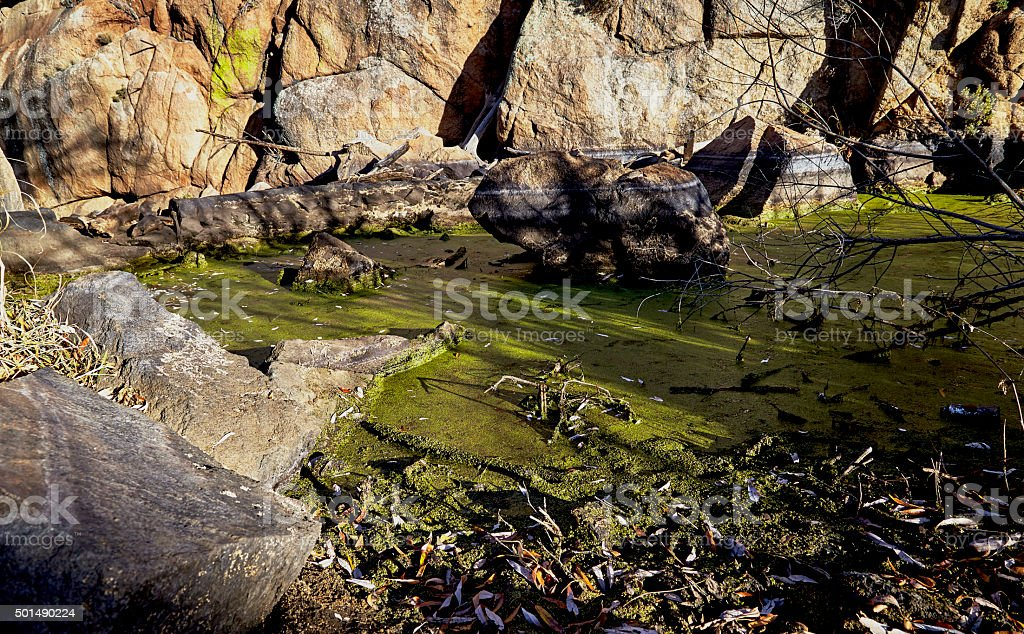 Green Algae in Stream stock photo