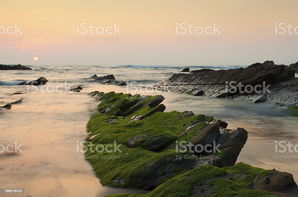 Green algae in the rocks, at sunset. Barrika beach, Spain royalty-free stock photo