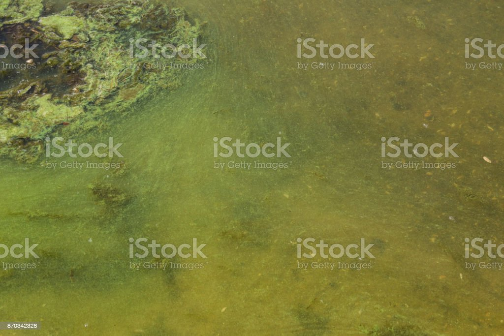 Green algae in water. Water pollution. Ecological problem stock photo
