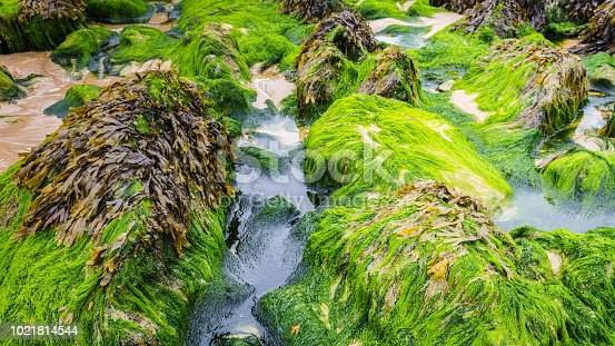 istock Green algae on the beach 1021814544