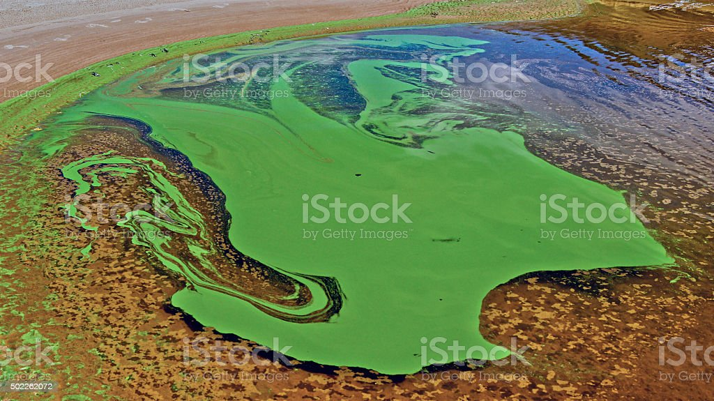 Green algae on the surface of the river.​​​ foto