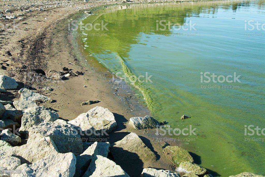Green Algae Washes Ashore stock photo