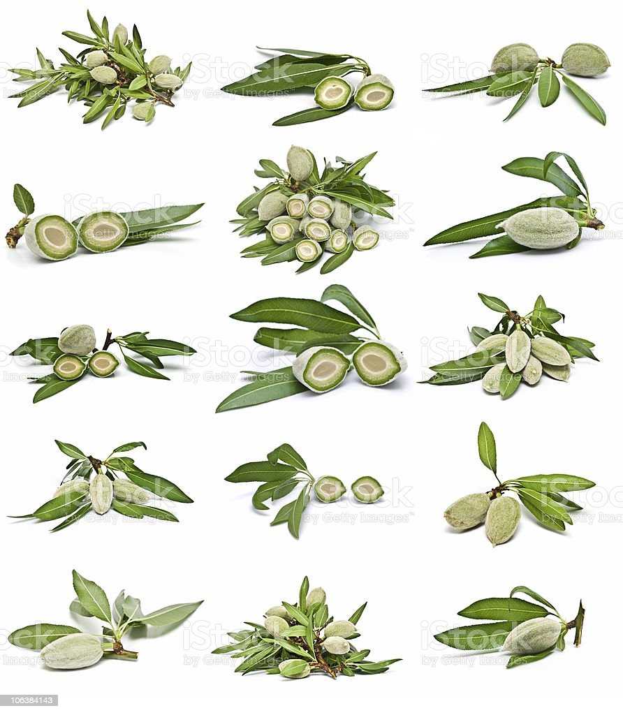 Green almonds collection. stock photo