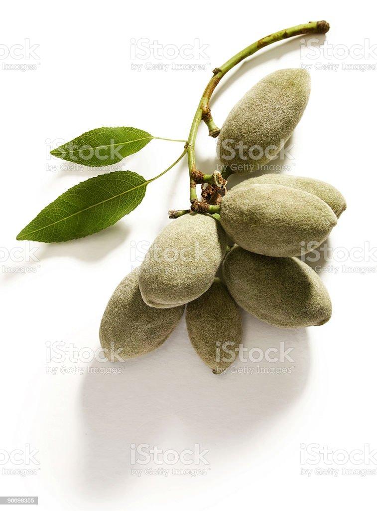 Green almonds stock photo