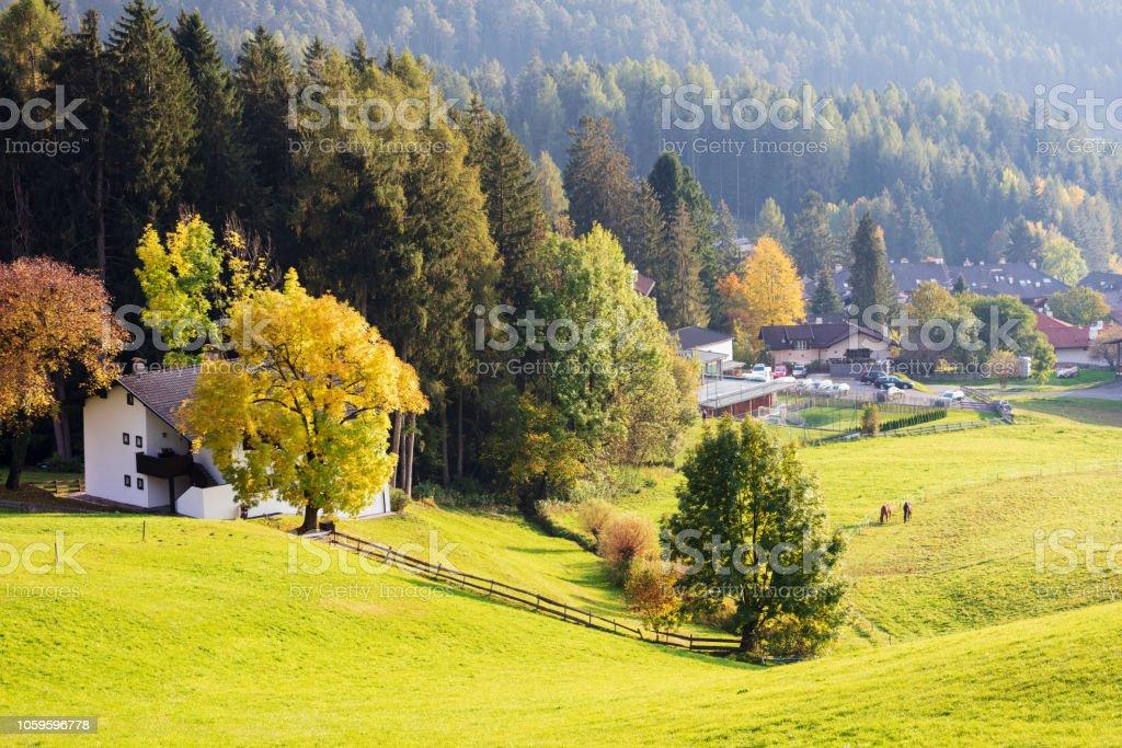 Green alpean meadow stock photo