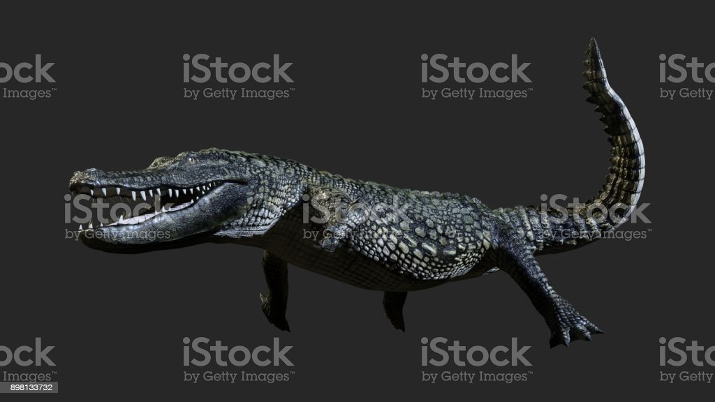 green American alligator stock photo