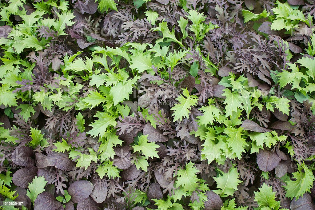 Green and Black Garden Leaves royalty-free stock photo