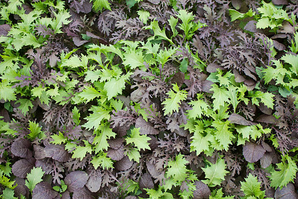 Green and Black Garden Leaves stock photo
