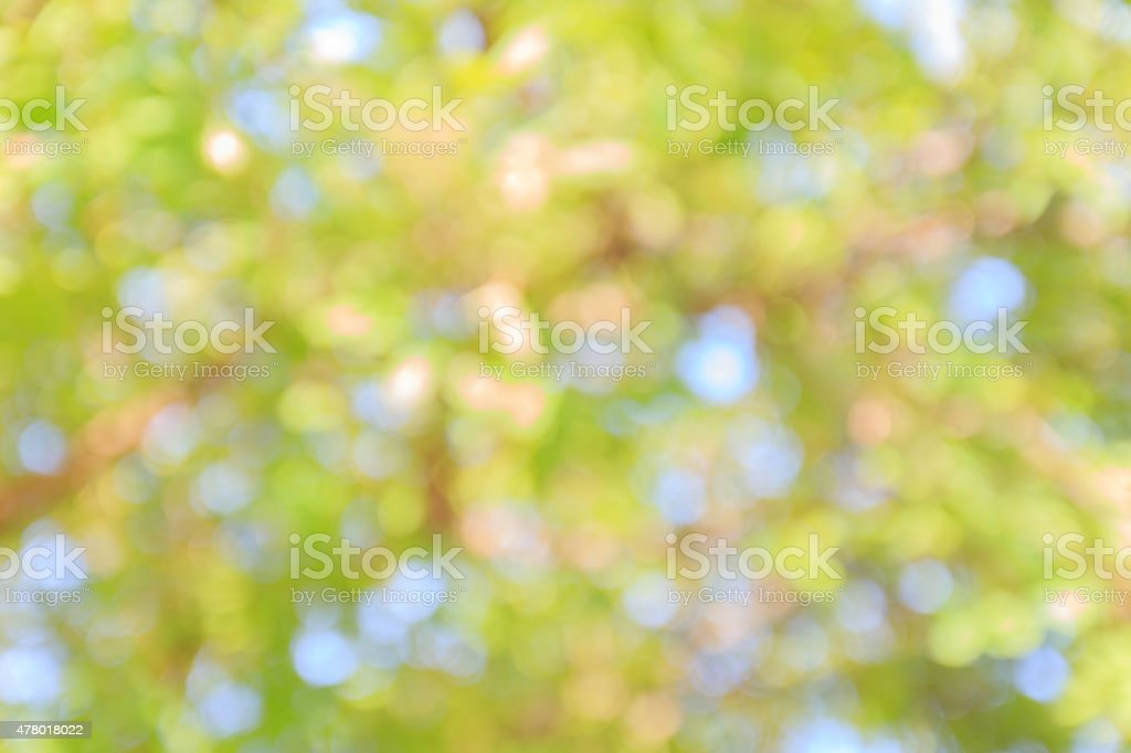 Green and blue summer bokeh for background stock photo