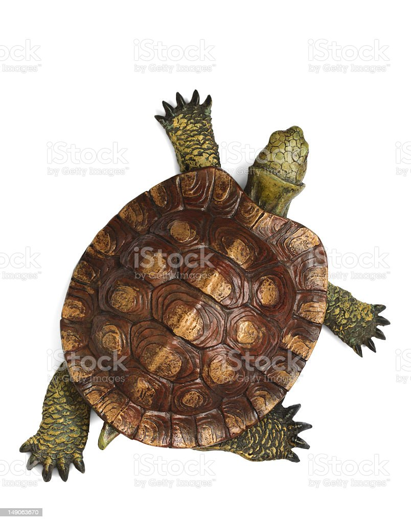 Green and brown tortoise walking across picture stock photo