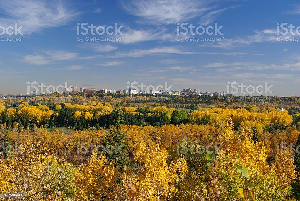 Green and Gold University of Alberta stock photo