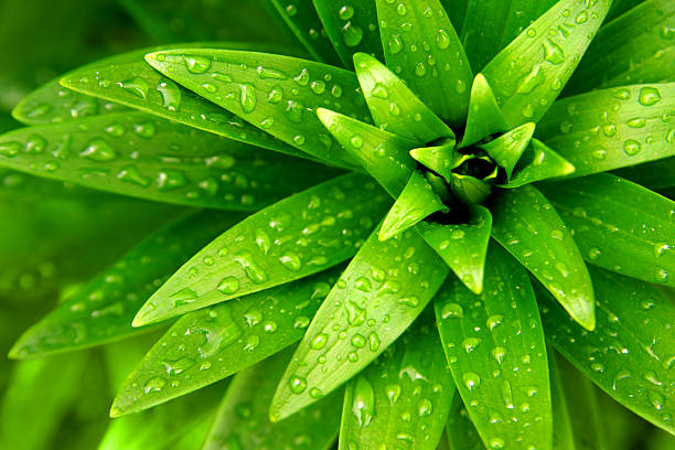 A green and lively plant with water drops on it
