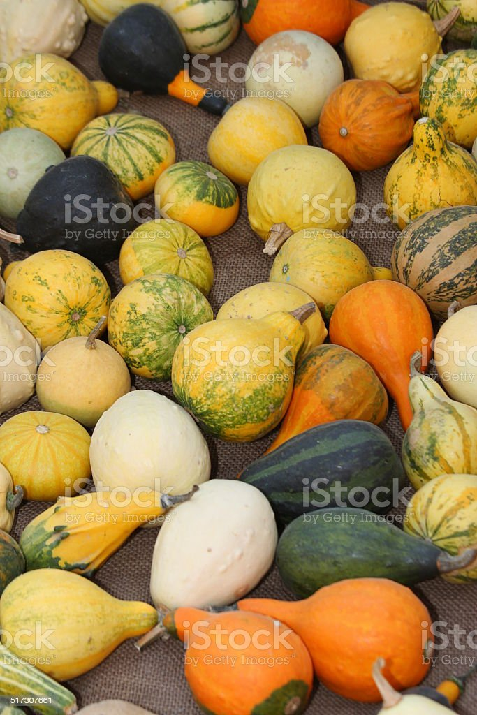 green and orange pumpkins  on sale at the market stock photo