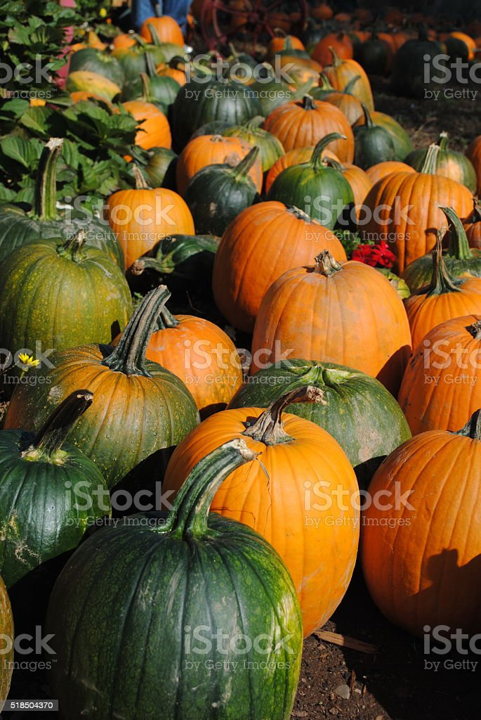 Green and Orange Pumpkins stock photo