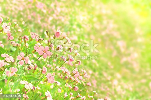 1135260918 istock photo Green and pink flower background 1207902015