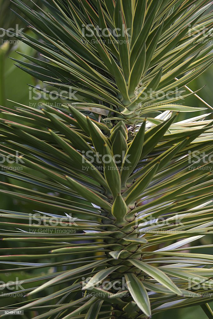 Green and Spikey royalty-free stock photo