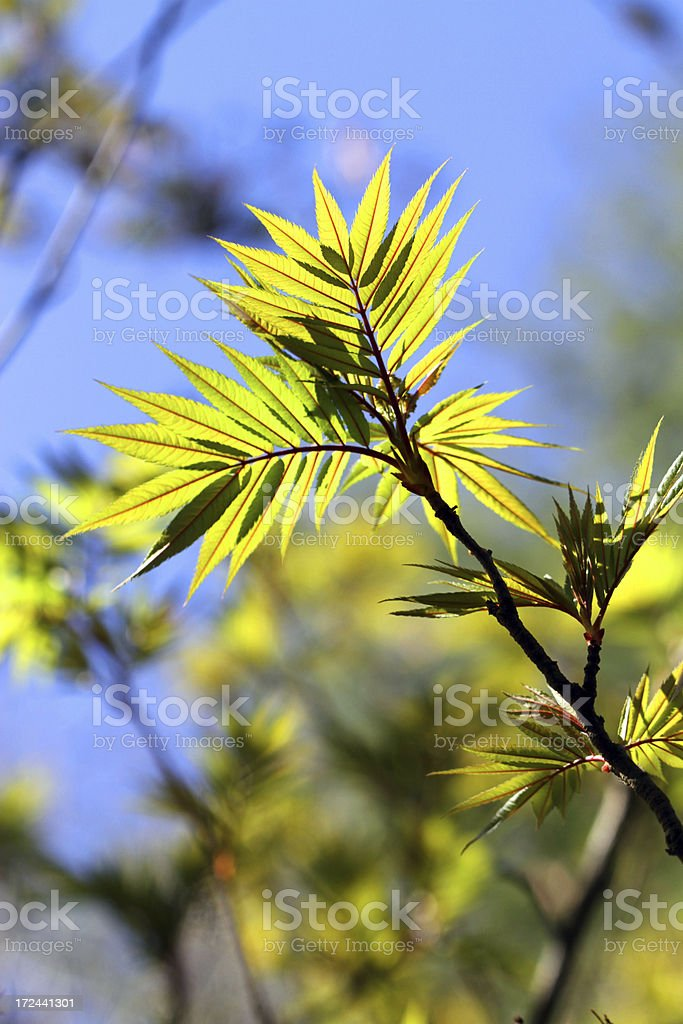 Green and Sun royalty-free stock photo