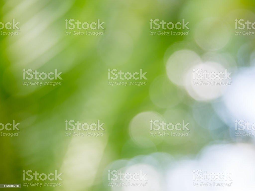 Bianco E Verde Bokeh Sfondo Di Natura Fotografie Stock E Altre