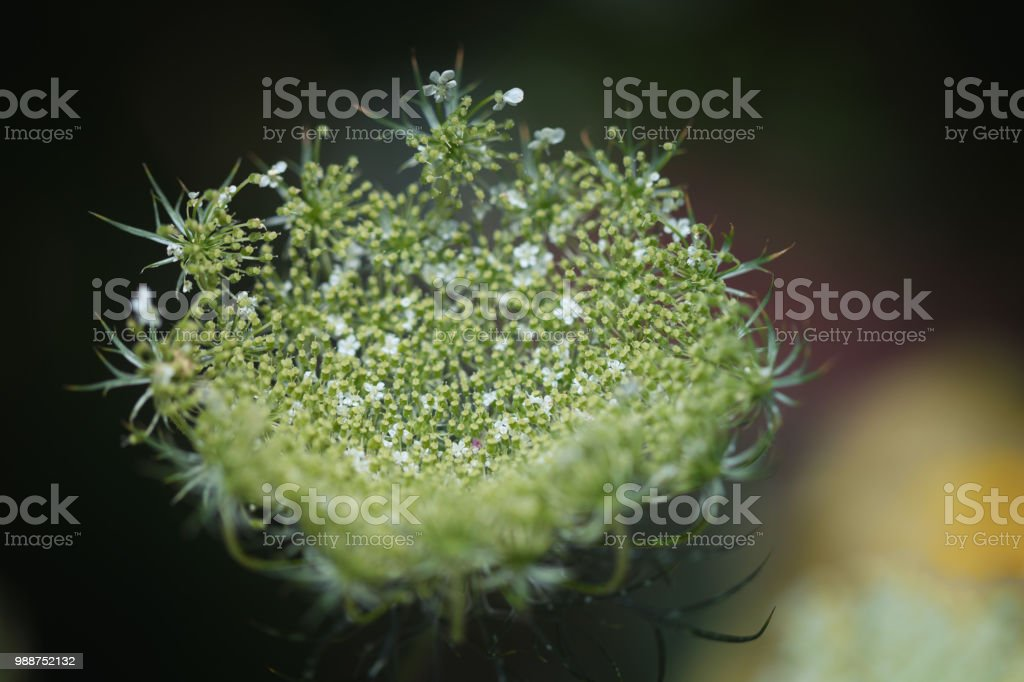 Green and white flower bud stock photo