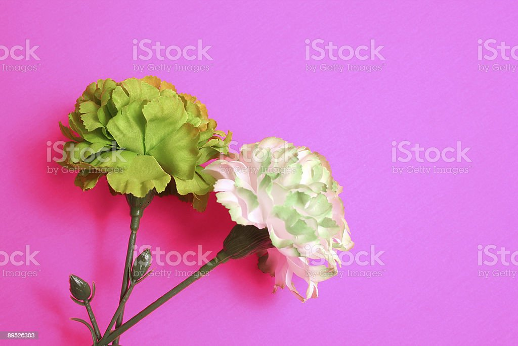 Green and white flower royalty-free stock photo