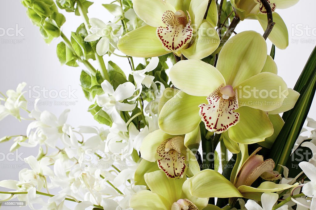 Green and White orchid stock photo