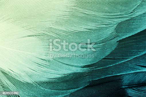 istock green and yellow color tone vintage background 958503460